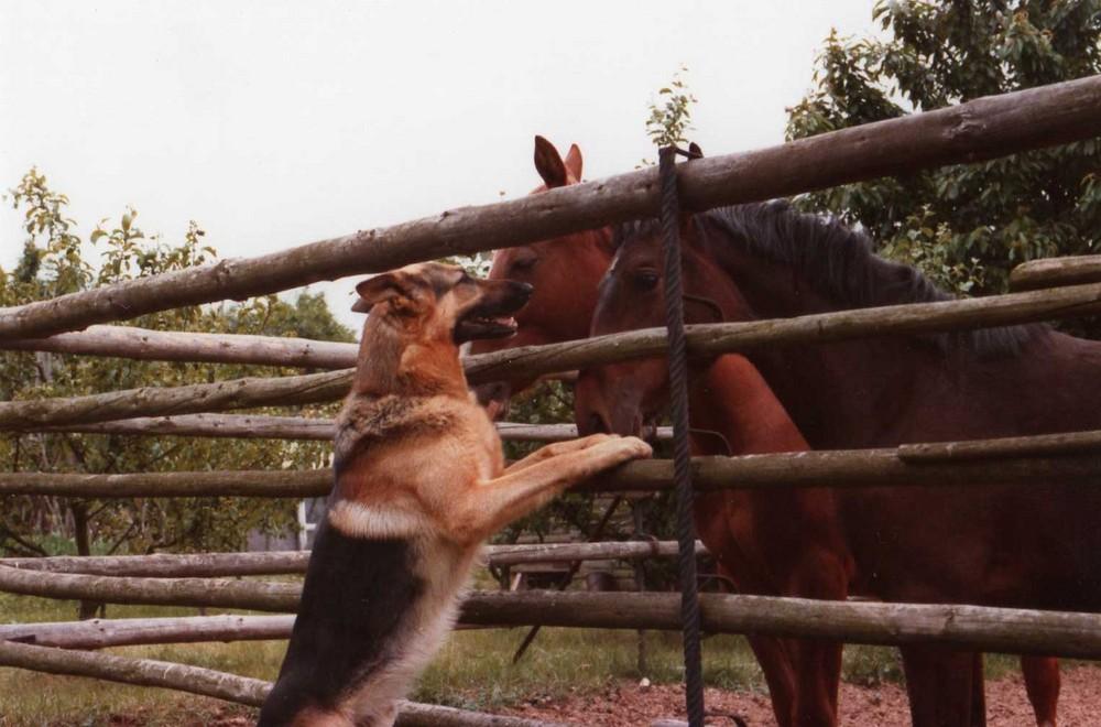 Das ist Freundschaft !