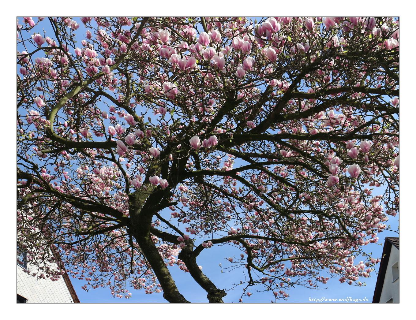Das ist Frühling pur :-)