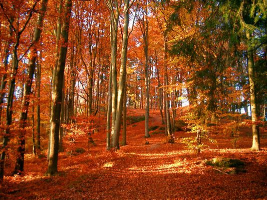 Das ist Herbst!!!!!