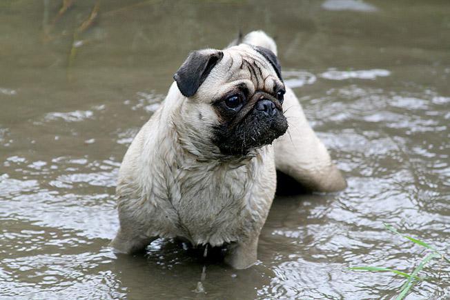 ...das ist mein Bade-Tümpel...