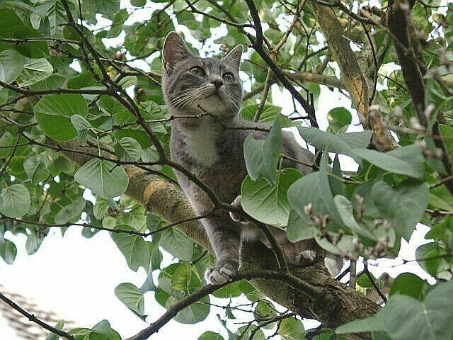 Das ist mein Baum!