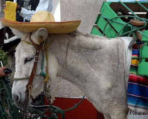 Das ist mein Hut !