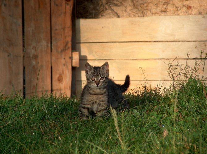 das ist mein Katzchen