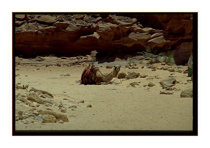 das ist meine Wüste !