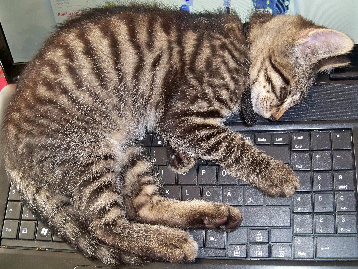 das ist seine Lieblingstaste,damit schafft er es meinen Desktop auf den Kopf zu stellen.....