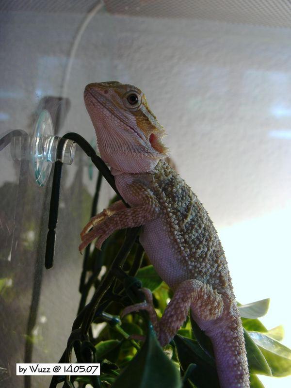 Das ist Spike!