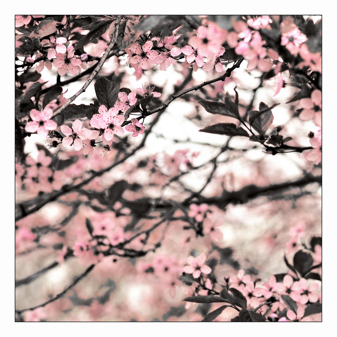 Das Jahr, wo der Frühling auf einen Samstag fiel...