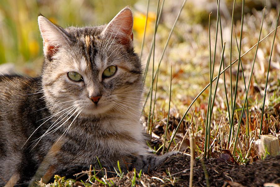 Das Kätzchen...