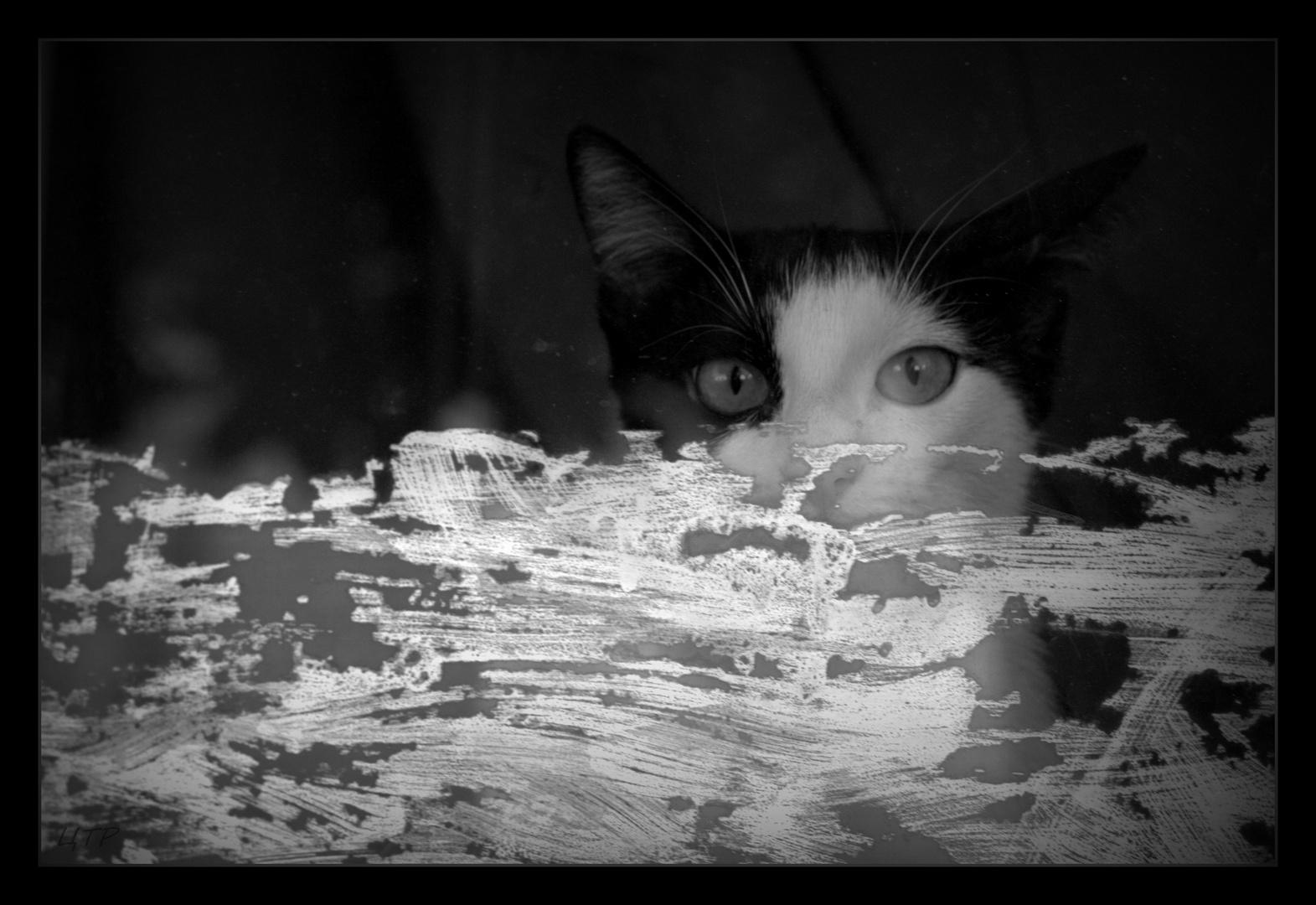 das Kätzchen am Fenster