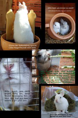 Das Kaninchengrundgesetz