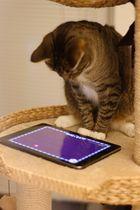 Das Katz- und Mauspad
