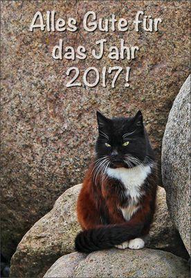 Das Katzen-Orakel ...