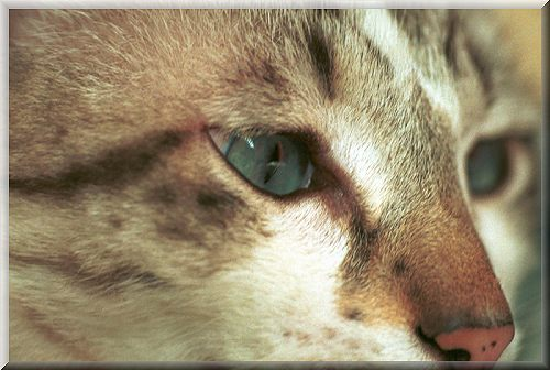Das Katzenauge sieht alles