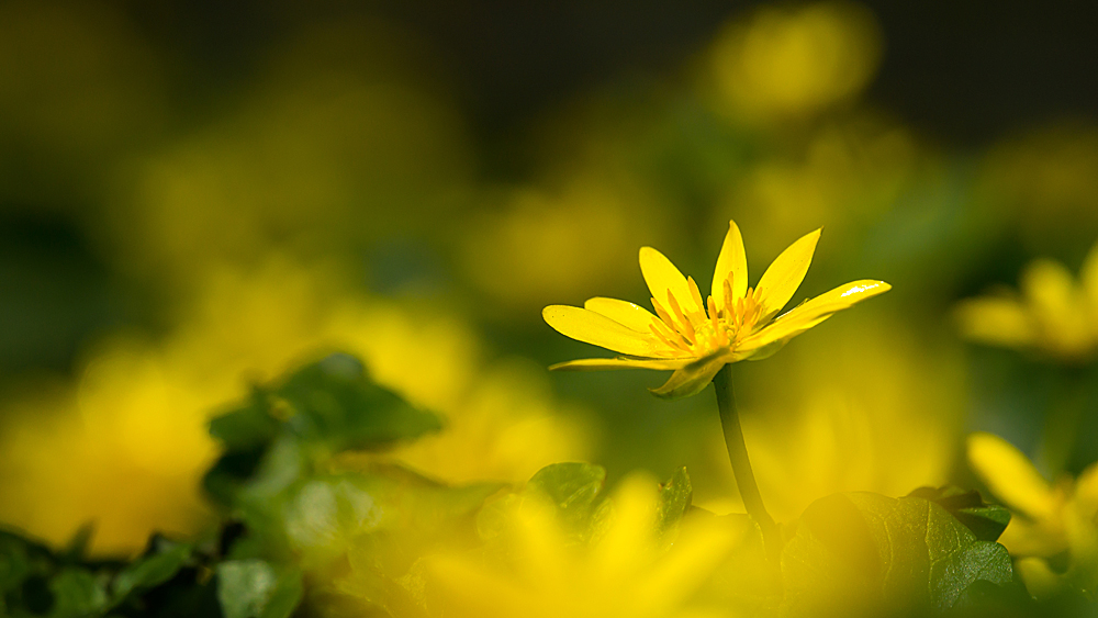 Das kleine Gelbe