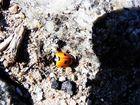 Das kleine Krabbeln