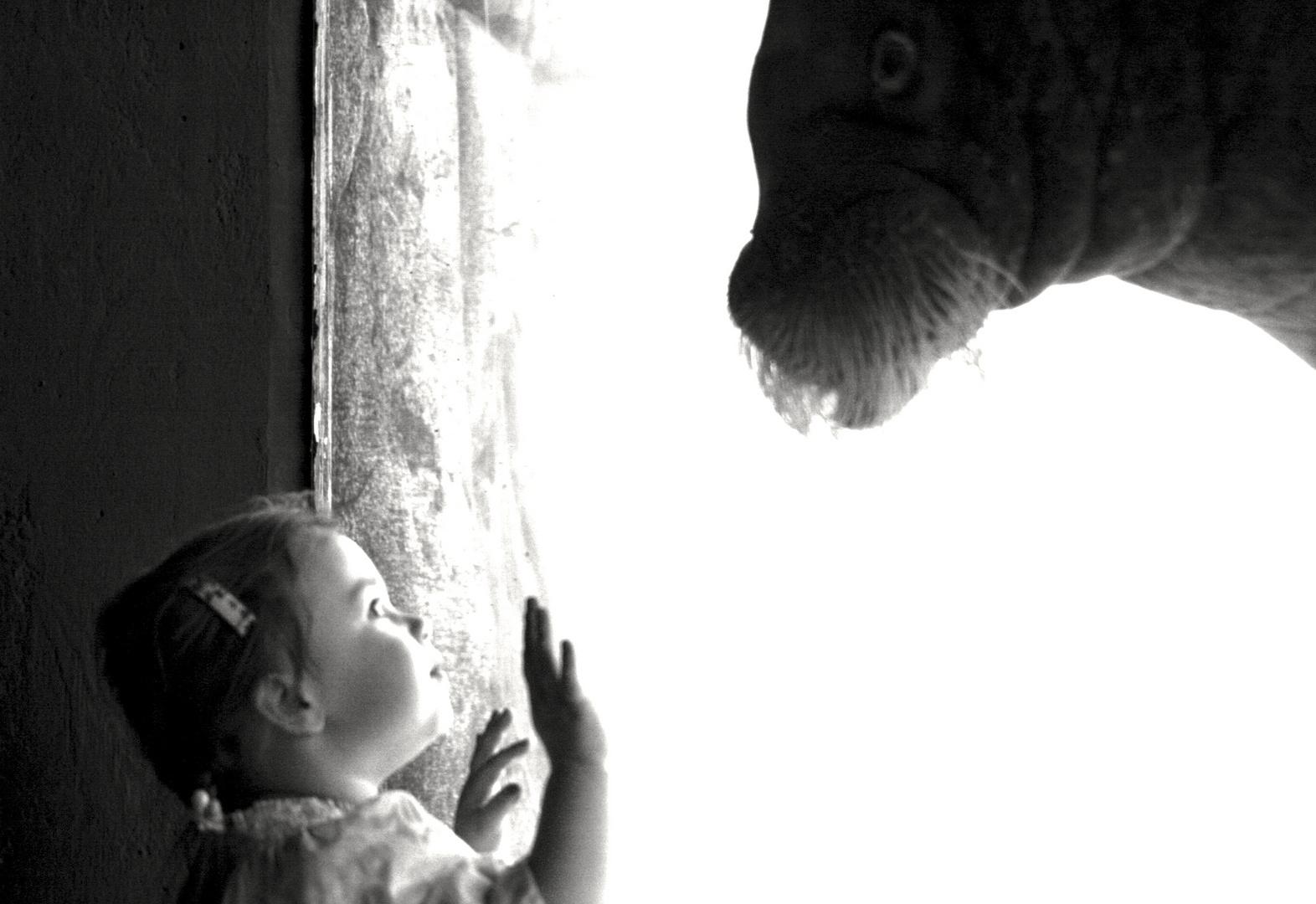 Das kleine Mädchen und das Walroß