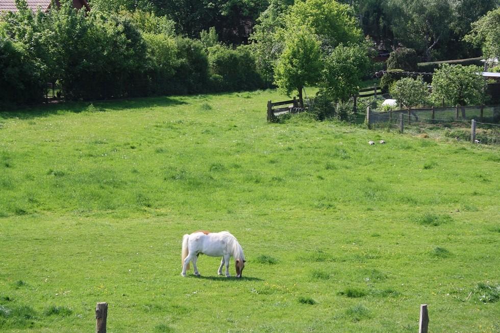 Das kleine Pferd