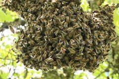 das Kuscheln der Bienen