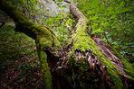 Das Land der Waldfeen - Der Wächter des Waldes