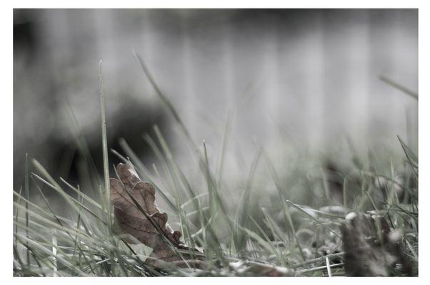 Das Laub landet im Gras