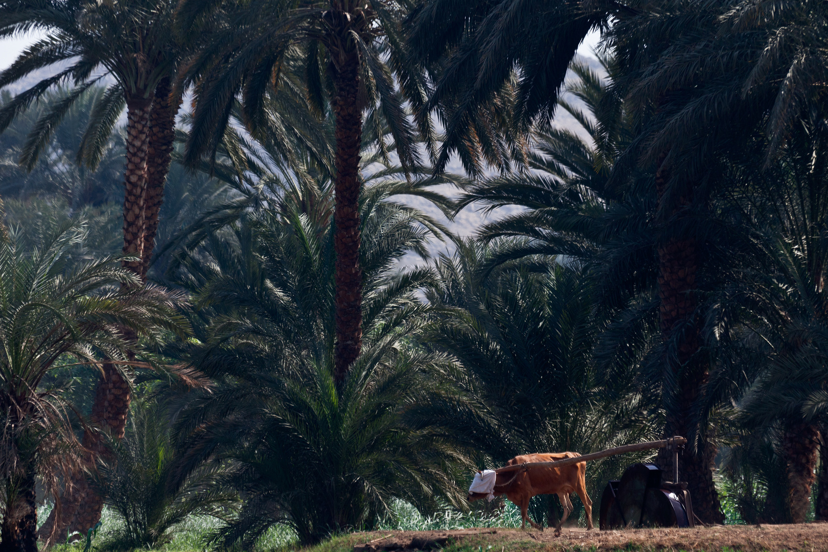 Das Leben am Nil (83)