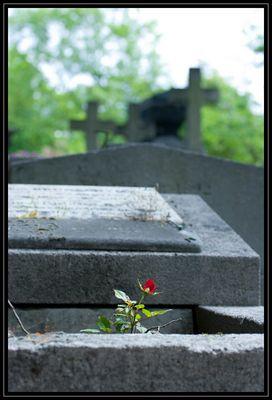 das Leben, die Liebe und der Tod