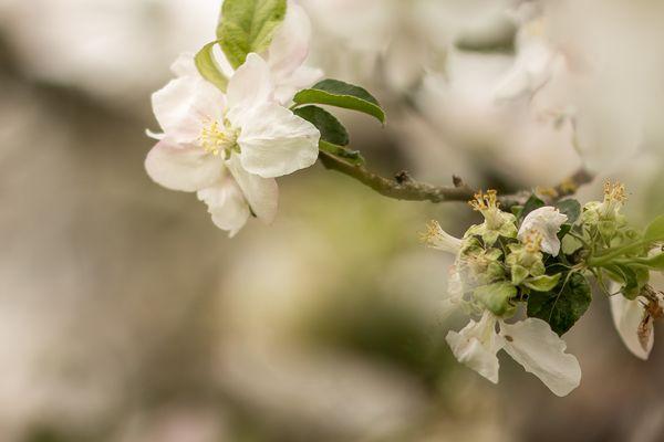Das Leben einer Blüte
