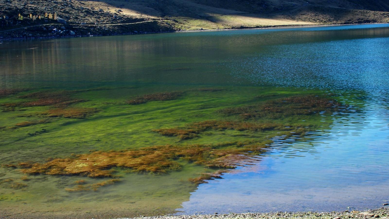 Das Leben in einem Bergsee (Melchsee auf 1900 Meter)