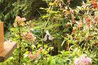 Das Leben in unserem Garten :-)