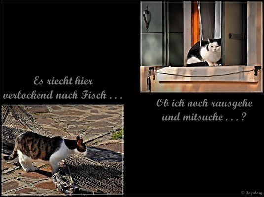 """""""Das Leben und dazu eine Katze:"""