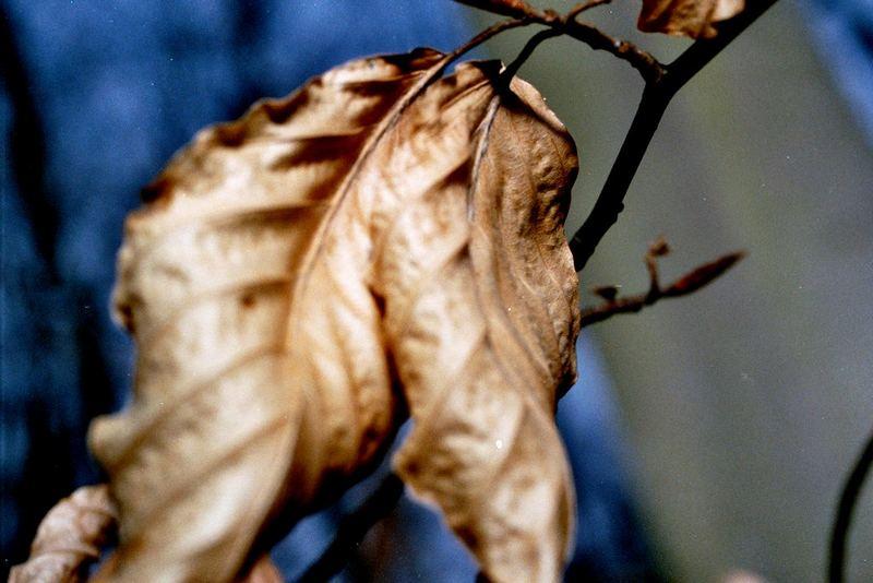 Das Leben zweier Blätter