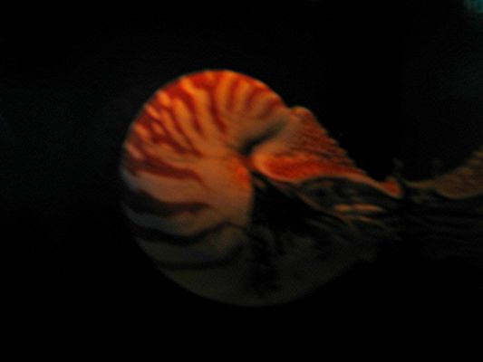 Das lebende Fossil