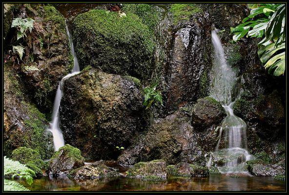 Das Lebenselexier Wasser