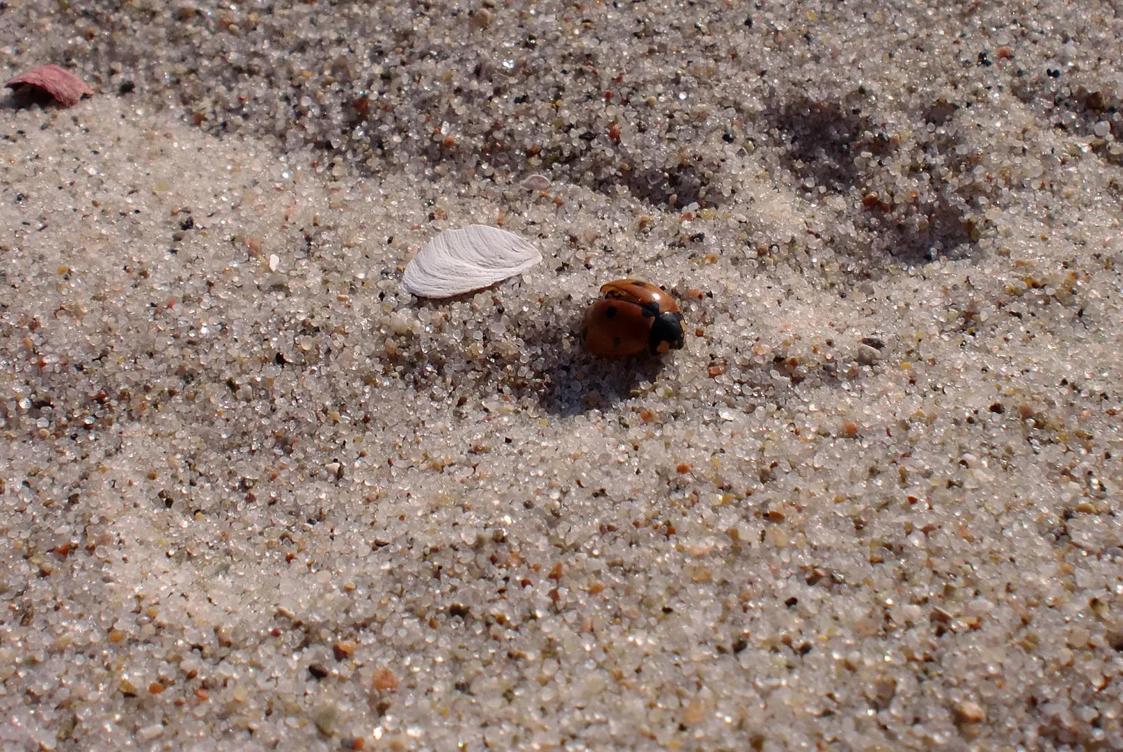 Das letze Mutschekääpchen am Strand (Ostsee)
