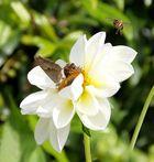 Das letzte Bienenbild........