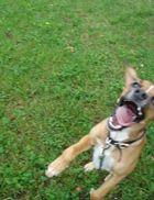 Das letzte Bild des Hundejägers ...