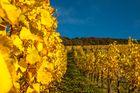 Das letzte Bild vom goldenen Oktober !