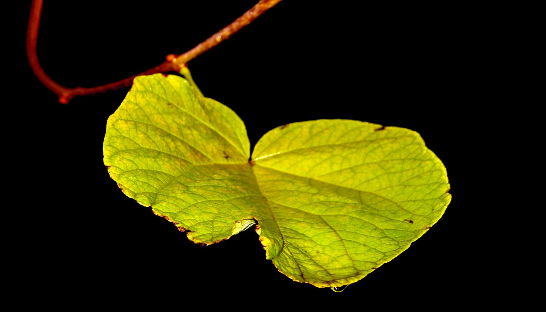 Das letzte Blatt am Baum.
