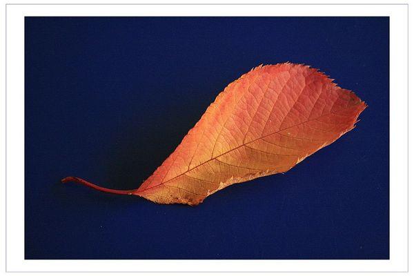 Das letzte Blatt vom Herbst