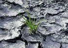 Das letzte Gras