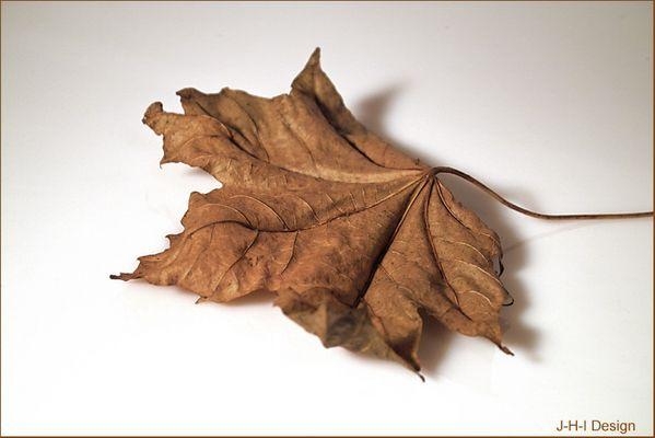 Das letzte Herbstblatt