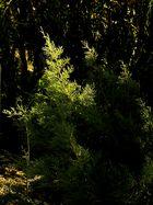 Das letzte Tageslicht einfangen / Catturare la ultima luce del giorno (1)