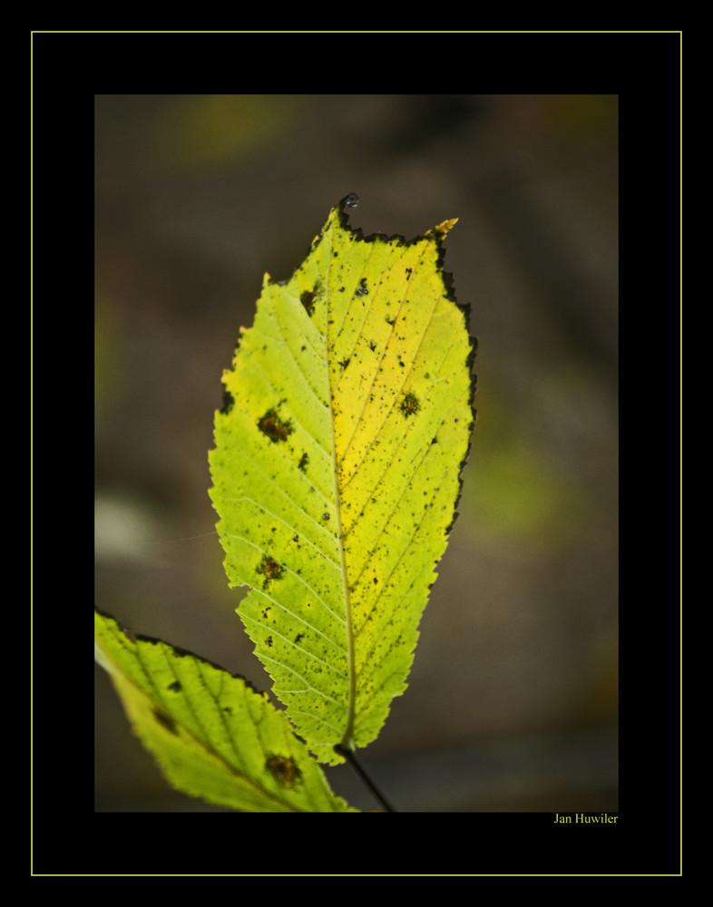 Das leuchten des Herbstes