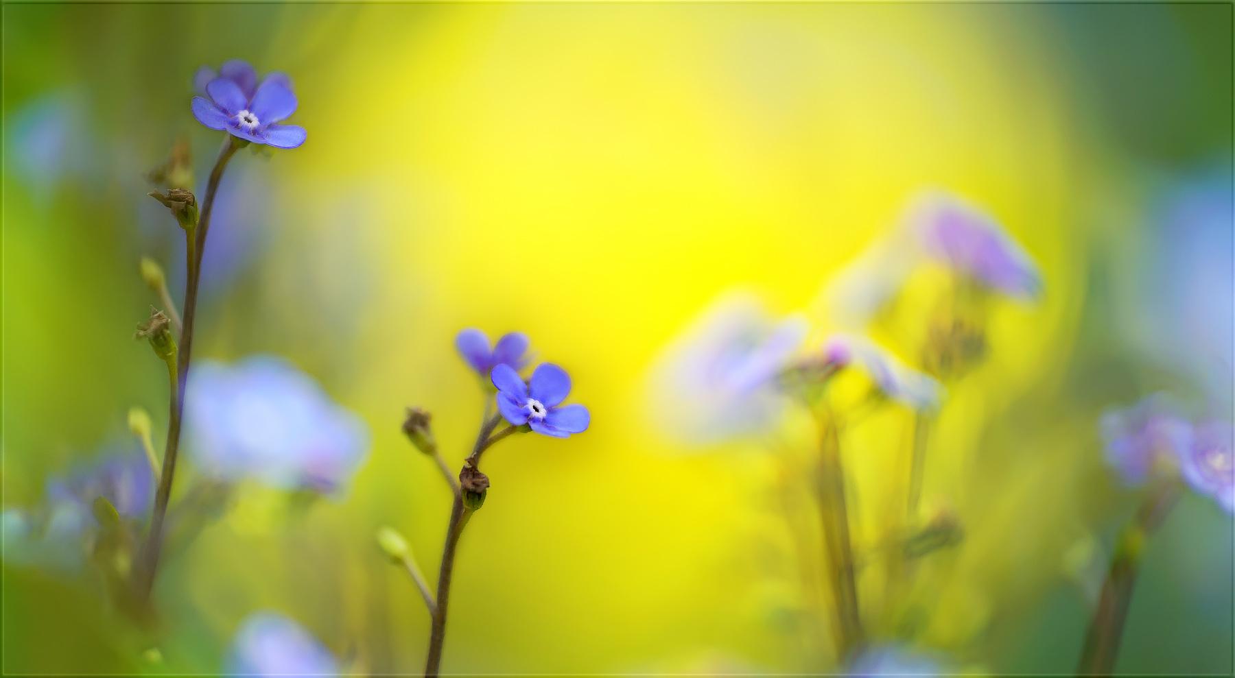 das licht des lebens spüren ...