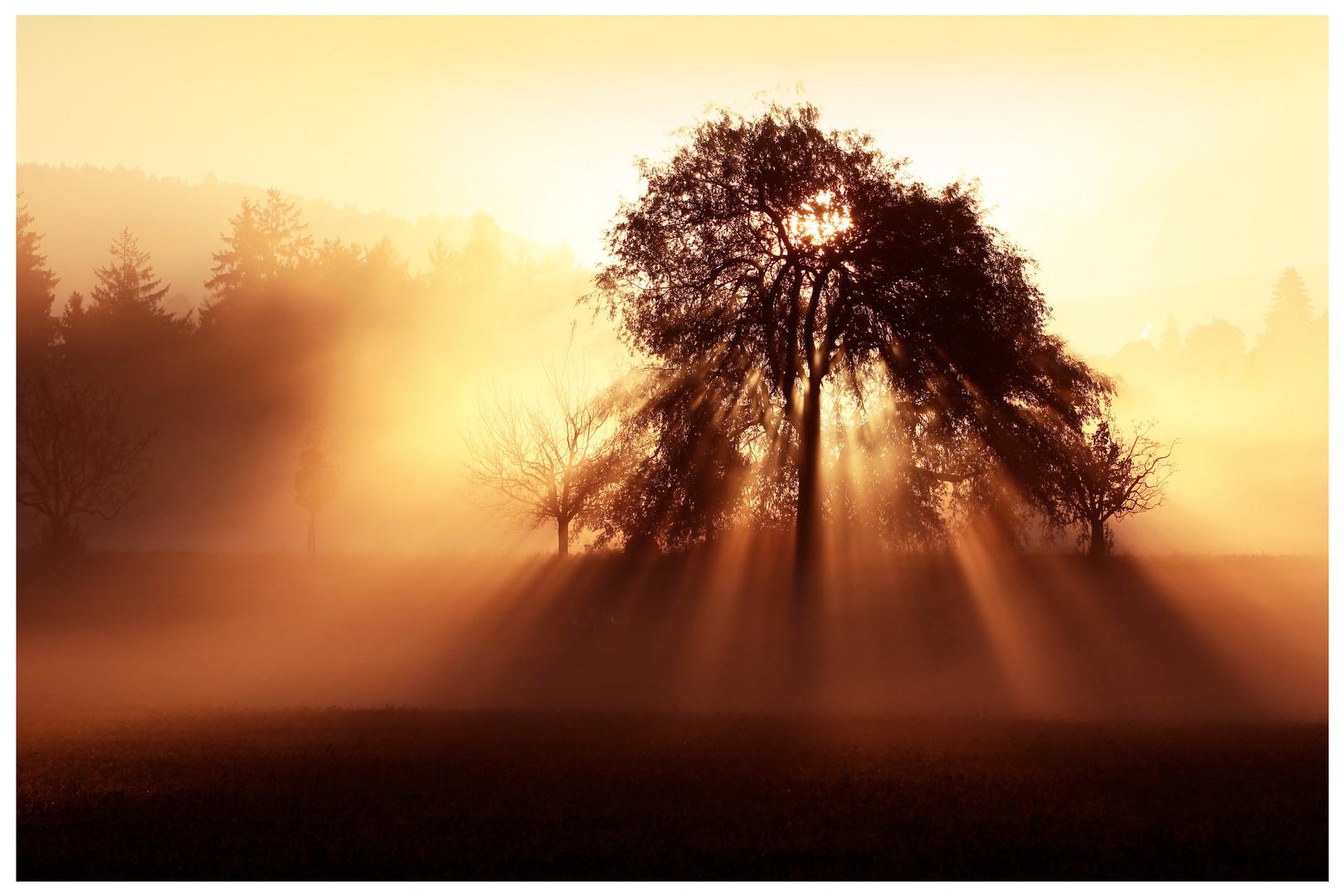 Das Licht durchdringt den Nebel