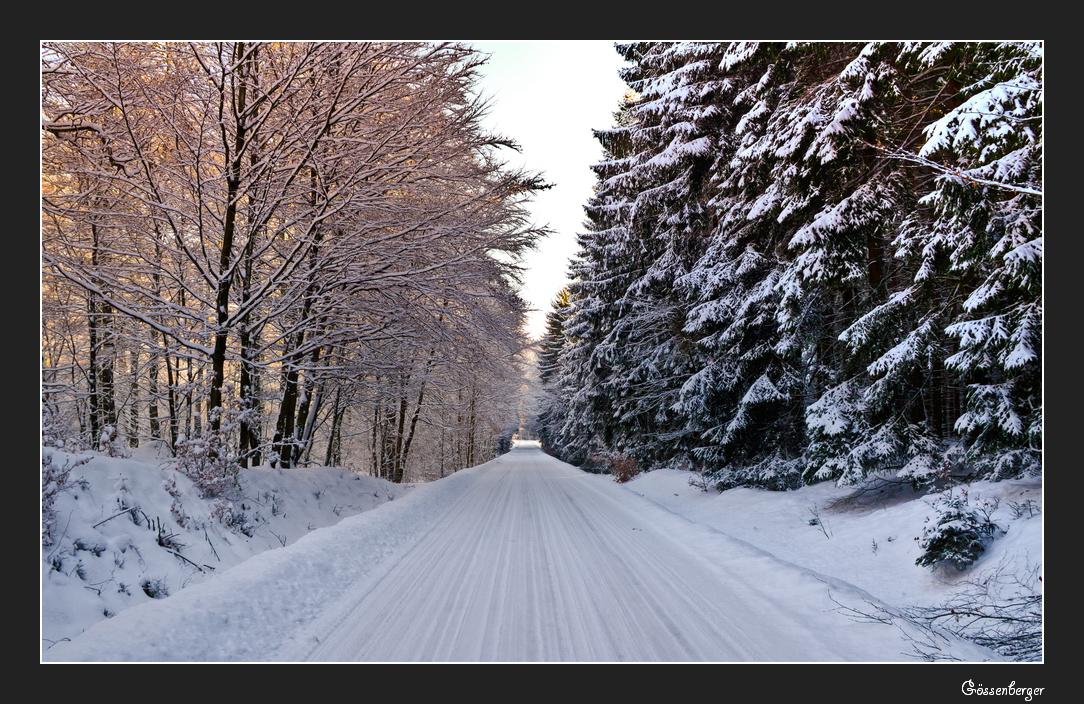 Das Licht im Winterwald 1