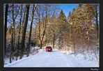 Das Licht im Winterwald 3