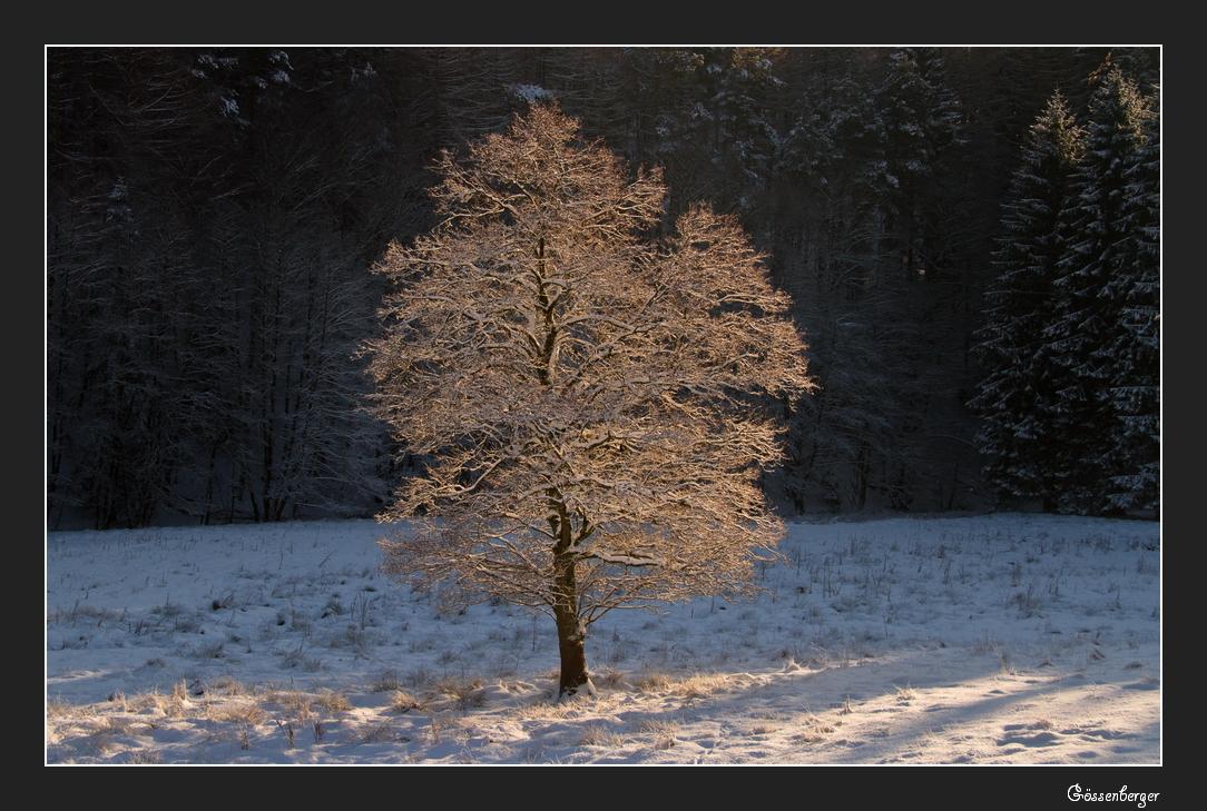 Das Licht im Winterwald 4