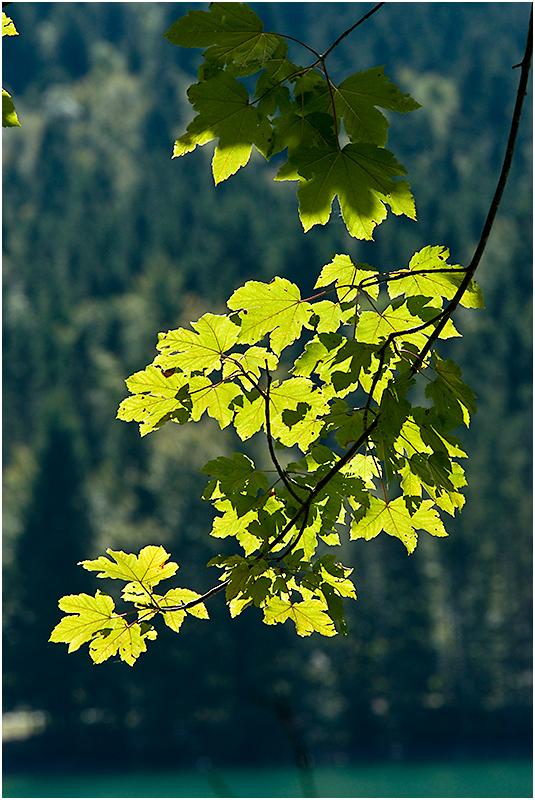 das Licht sagt: Herbst