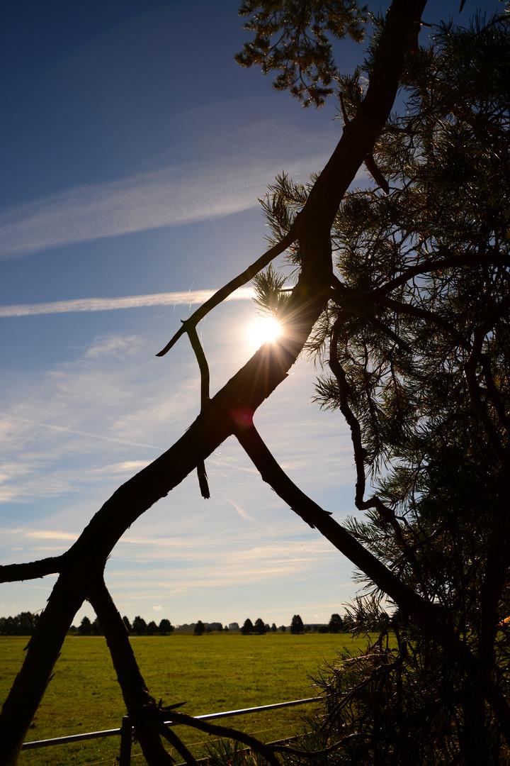 Das Licht schien mir aus des Baumes Aste...